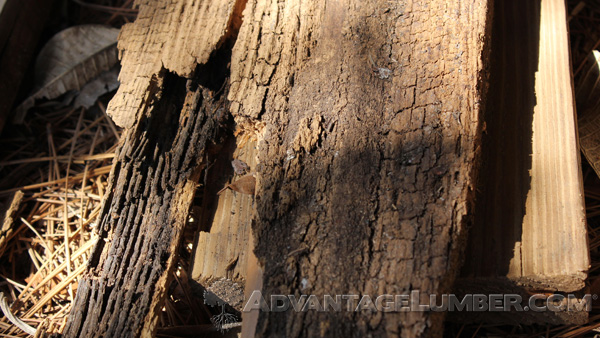 Softer woods like pine are prone to rot and decay. Hardwoods like Ipe? Not so much.