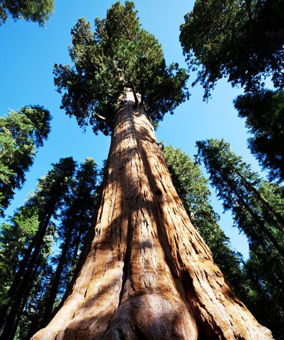 Redwood trees like this, are enjoyed by every generation that comes to national parks