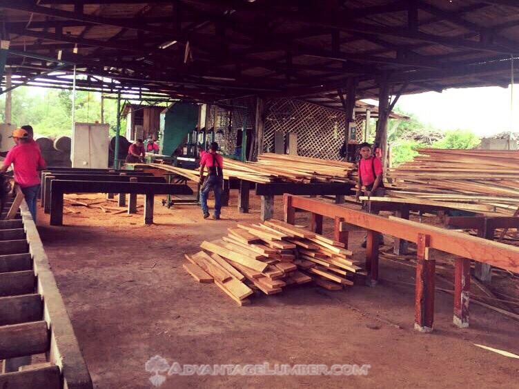 Brazil Sawmill