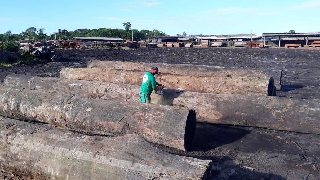 Brazil Logs